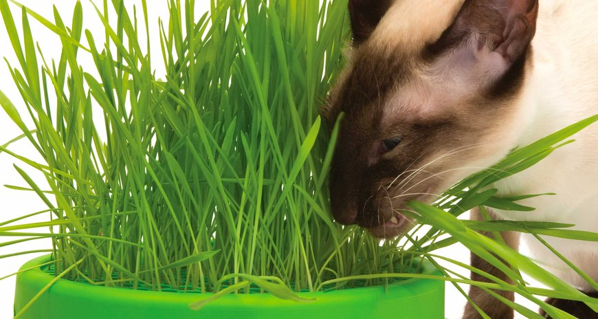 Cat it Grass